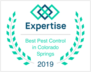 Best Pest Control Company in Colorado Springs